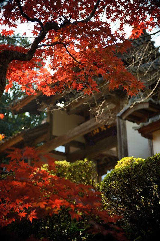 2013京都の紅葉!・龍穏寺_f0032011_16242230.jpg