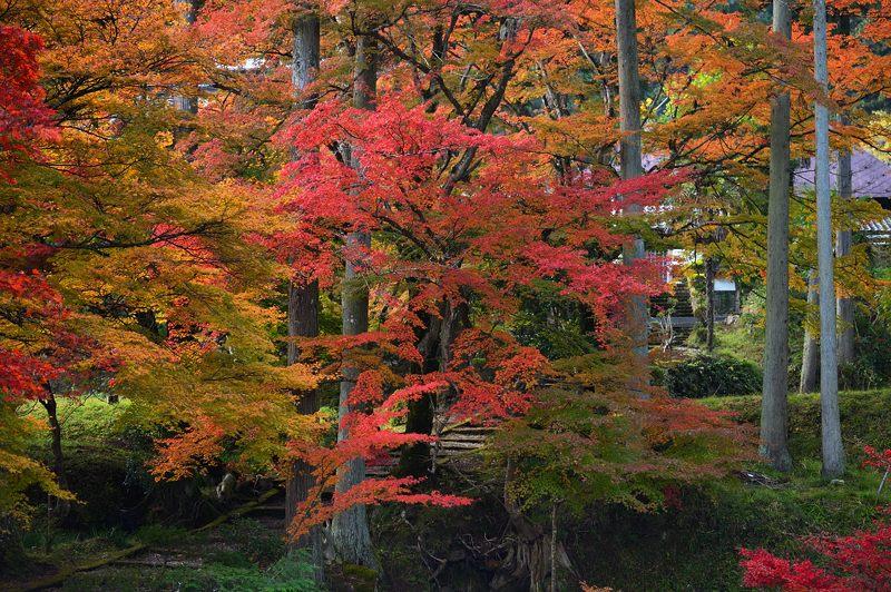 2013京都の紅葉!・龍穏寺_f0032011_1624358.jpg