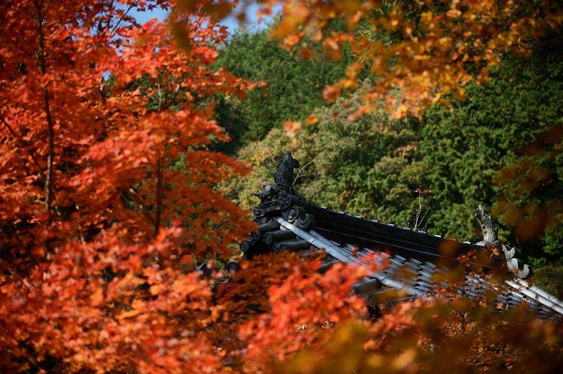 2013京都の紅葉!・龍穏寺_f0032011_1625570.jpg