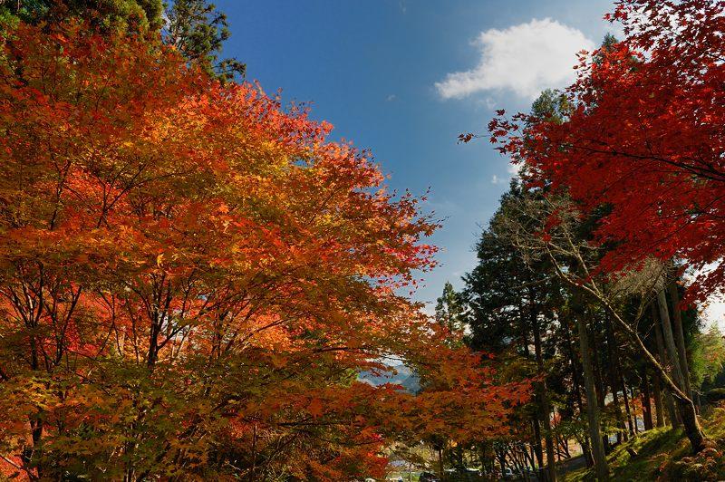2013京都の紅葉!・龍穏寺_f0032011_1627338.jpg