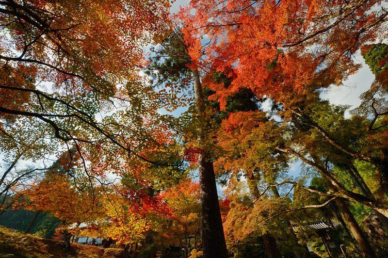2013京都の紅葉!・龍穏寺_f0032011_16275310.jpg