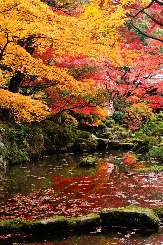湖東三山 参拝_c0220824_6432718.jpg