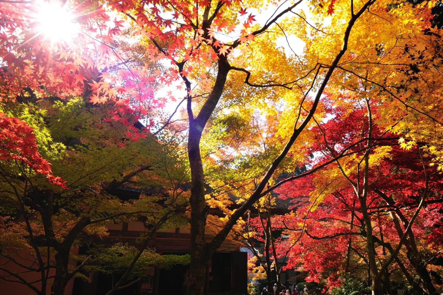 湖東三山 参拝_c0220824_6454372.jpg