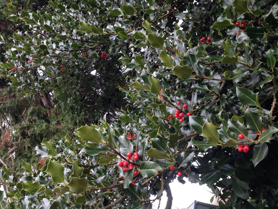 【告知】 『クリスマスのとっておきこんだてコンテスト』開催_d0104926_0134847.jpg