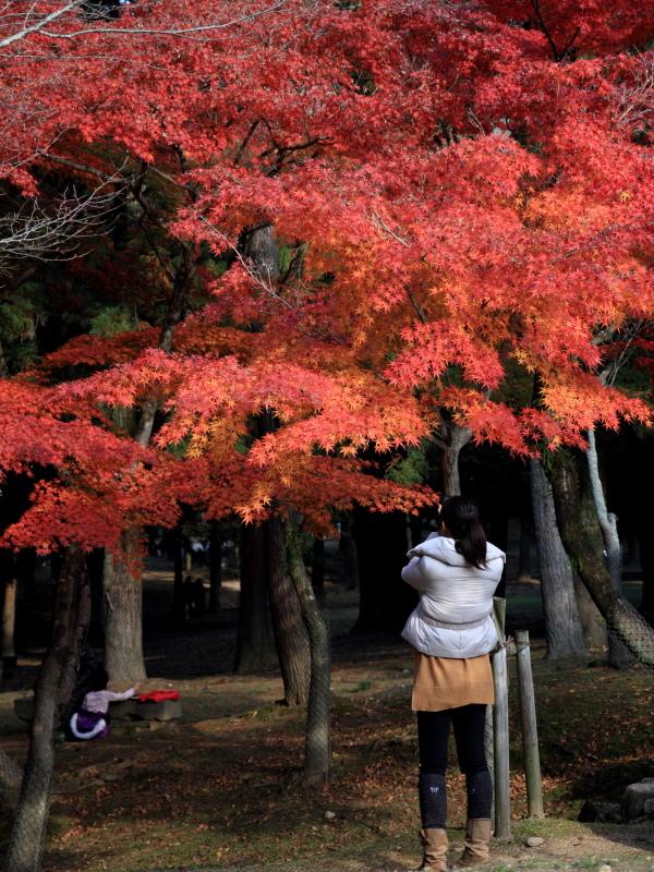 すっきりしたくて -奈良公園の紅葉風景-_a0203733_19394598.jpg