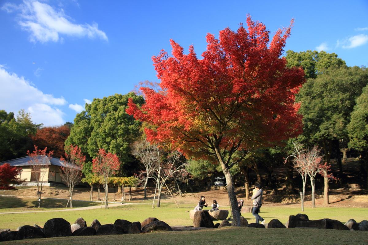 すっきりしたくて -奈良公園の紅葉風景-_a0203733_1972951.jpg