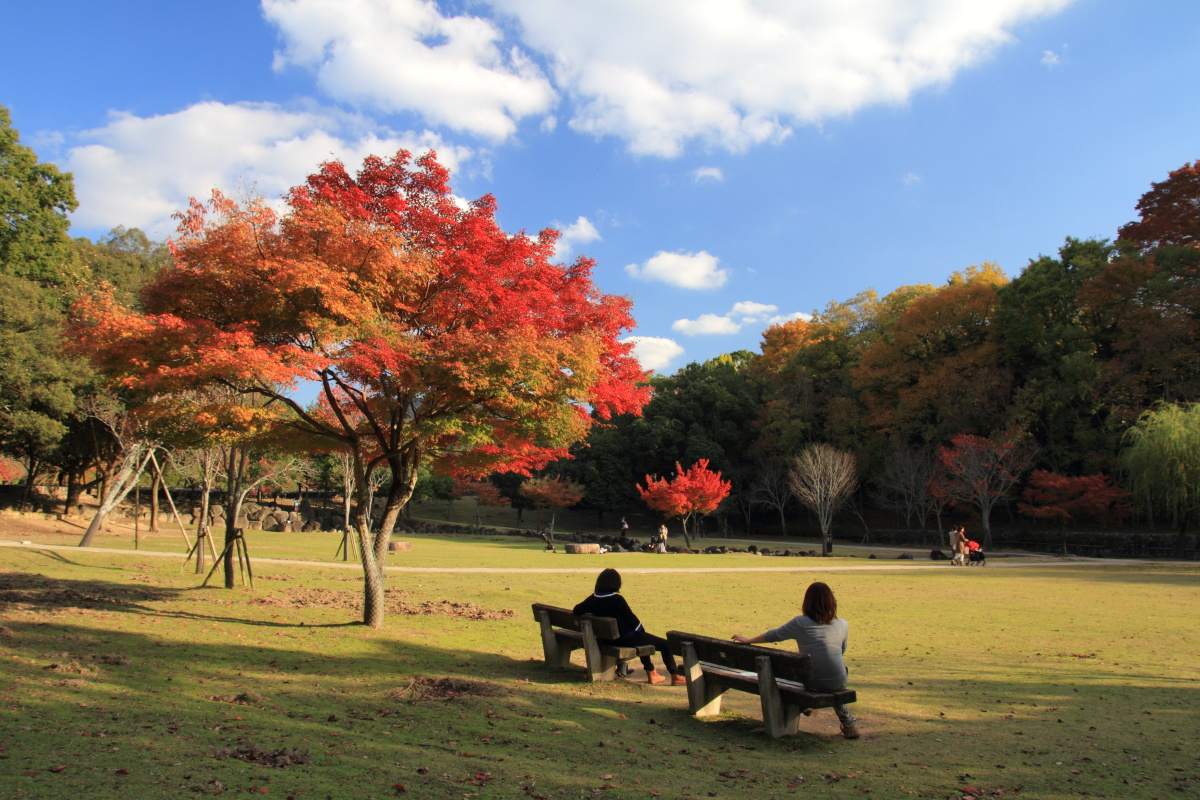 すっきりしたくて -奈良公園の紅葉風景-_a0203733_1974575.jpg