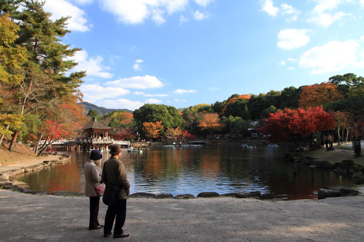 すっきりしたくて -奈良公園の紅葉風景-_a0203733_1975916.jpg