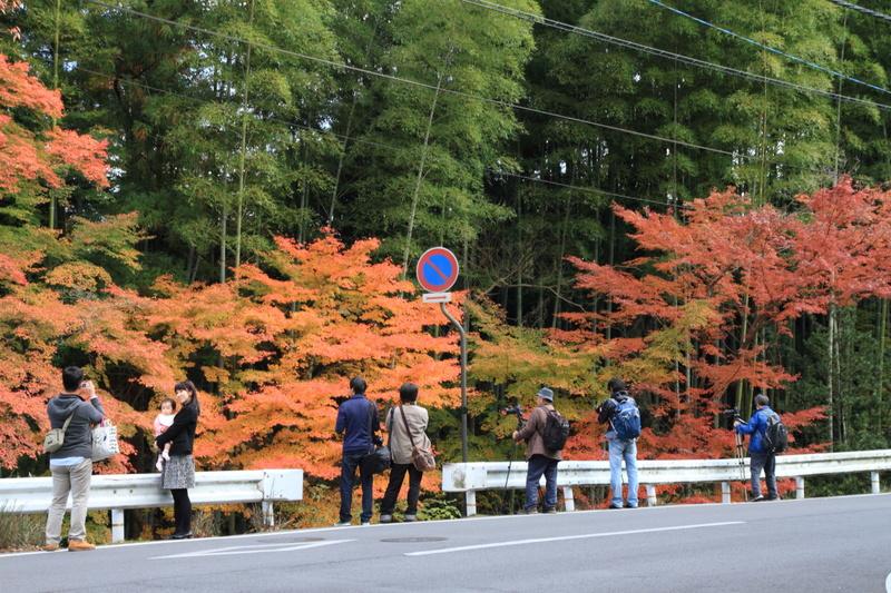 すっきりしたくて -奈良公園の紅葉風景-_a0203733_1981824.jpg