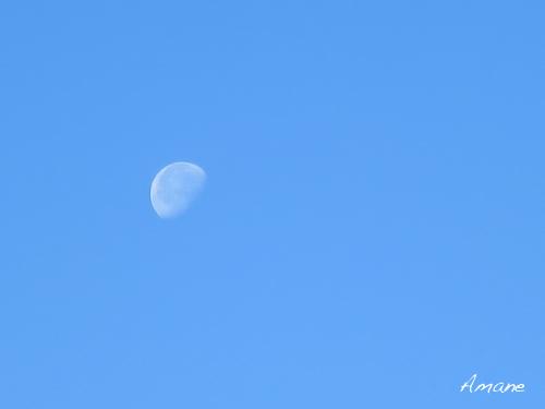 真昼の月_e0262651_20582590.png