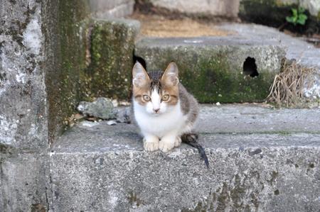 近所のネコ 3_a0134952_2183958.jpg