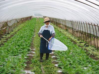「長尾農園」 安全・安心・美しさにこだわった長尾ブランドの野菜たち_a0254656_1903513.jpg