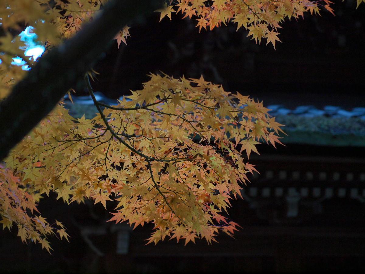 紅葉 2013 <一休寺>        _f0021869_23591971.jpg