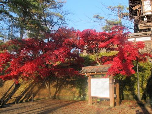 晩秋、千秋公園の紅葉・黄葉・落葉のルクス(lux)・・・その6_c0075701_19231037.jpg