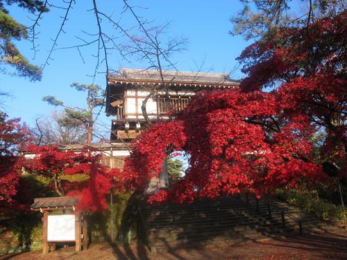 晩秋、千秋公園の紅葉・黄葉・落葉のルクス(lux)・・・その6_c0075701_1923168.jpg