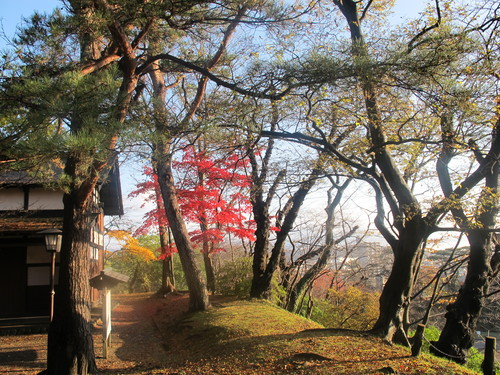 晩秋、千秋公園の紅葉・黄葉・落葉のルクス(lux)・・・その6_c0075701_19232145.jpg