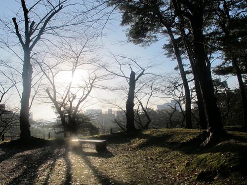 晩秋、千秋公園の紅葉・黄葉・落葉のルクス(lux)・・・その6_c0075701_19232731.jpg