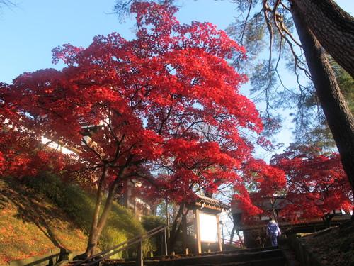 晩秋、千秋公園の紅葉・黄葉・落葉のルクス(lux)・・・その6_c0075701_19233199.jpg