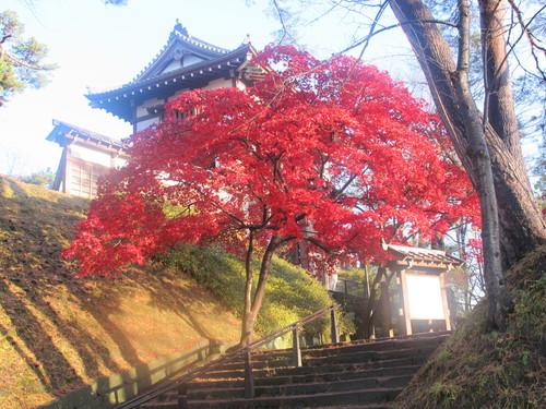 晩秋、千秋公園の紅葉・黄葉・落葉のルクス(lux)・・・その6_c0075701_19233662.jpg