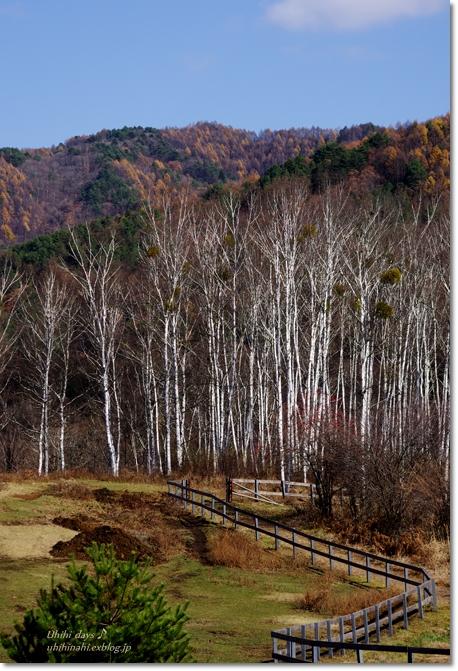秋の開田高原 から 世界遺産 白川郷へ・・・_f0179404_2114385.jpg