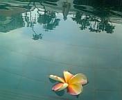 シンガポール2日め_b0025511_21351297.jpg