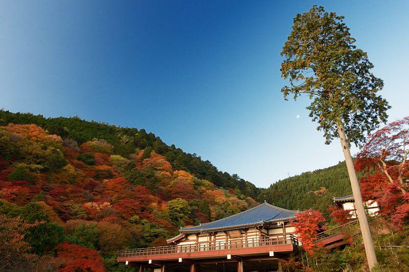 2013京都の紅葉!・善峰寺 其の一_f0032011_17442533.jpg