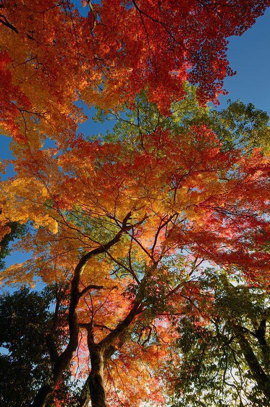 2013京都の紅葉!・善峰寺 其の一_f0032011_17444673.jpg