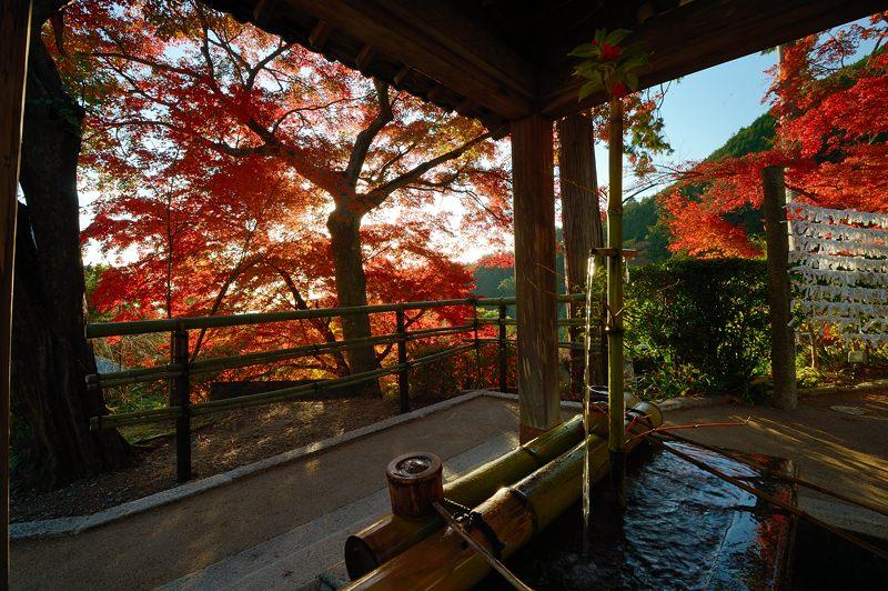 2013京都の紅葉!・善峰寺 其の一_f0032011_17452363.jpg