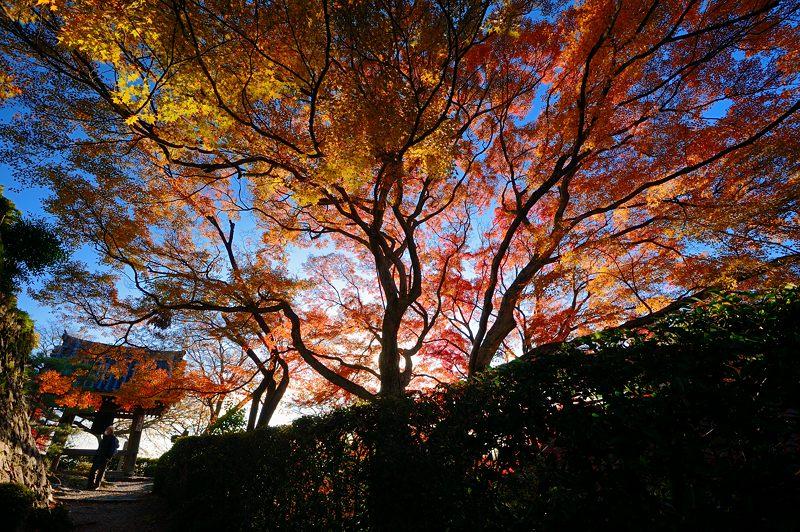 2013京都の紅葉!・善峰寺 其の一_f0032011_17455094.jpg