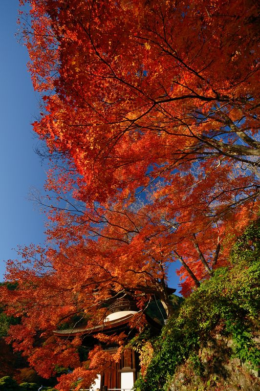 2013京都の紅葉!・善峰寺 其の一_f0032011_17455917.jpg