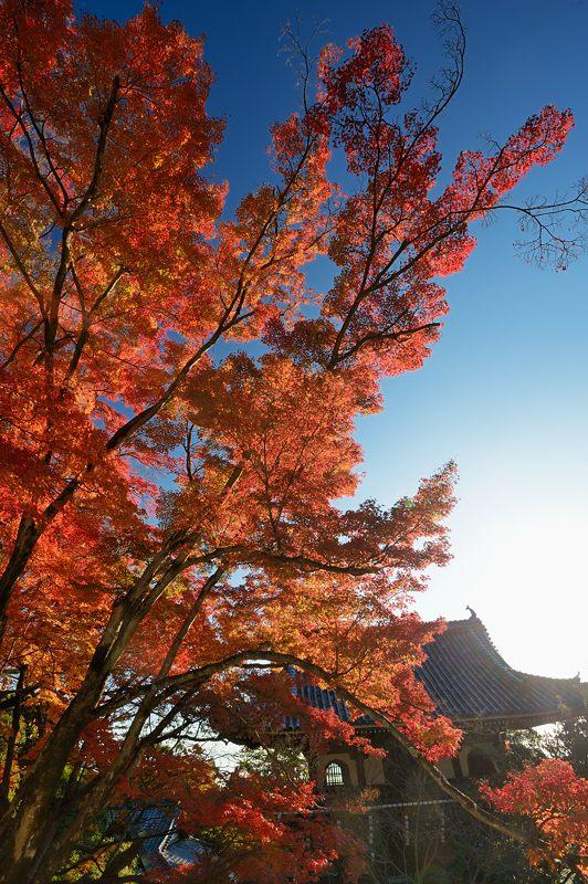 2013京都の紅葉!・善峰寺 其の一_f0032011_1745850.jpg