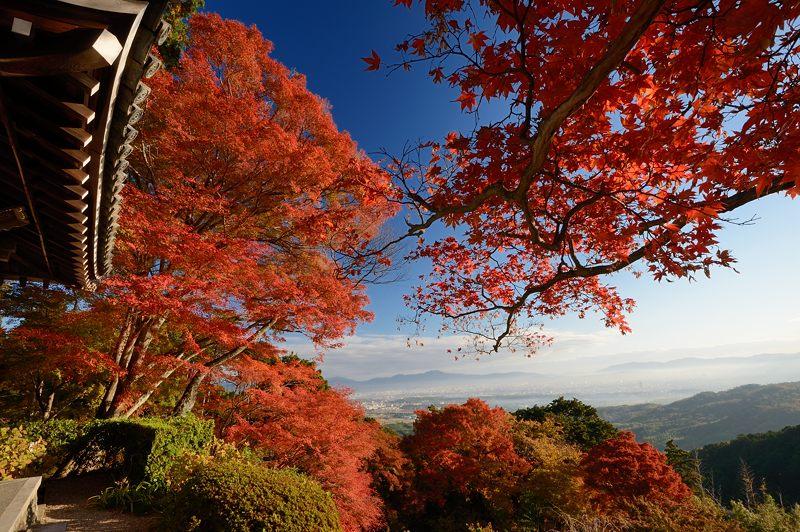 2013京都の紅葉!・善峰寺 其の一_f0032011_1746152.jpg
