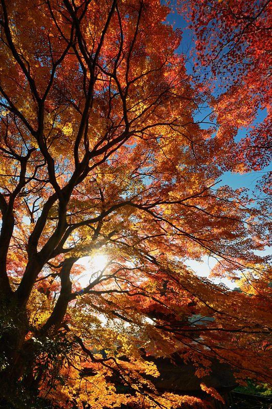 2013京都の紅葉!・善峰寺 其の一_f0032011_1746245.jpg