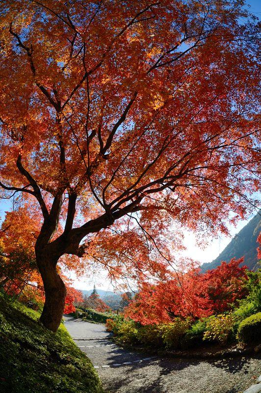 2013京都の紅葉!・善峰寺 其の一_f0032011_17475522.jpg