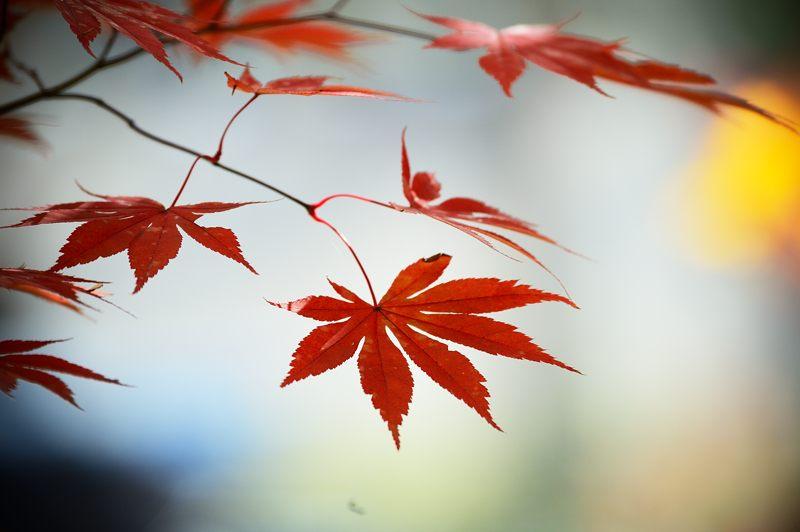 2013京都の紅葉!・善峰寺 其の一_f0032011_1750922.jpg