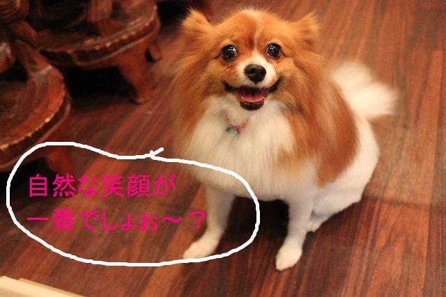 b0130018_110987.jpg