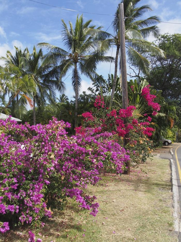 2013 10月 ハワイ(31)  ラニカイビーチへ  幸せ〜_f0062122_112588.jpg