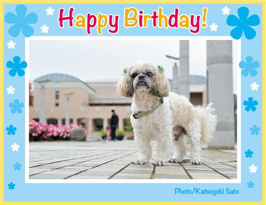エールくん、りきくん、お誕生日おめでとう♪_d0102523_8574556.jpg