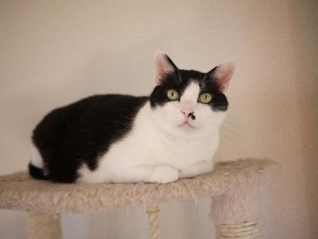 猫のお友だち 正宗くん編。_a0143140_23242927.jpg