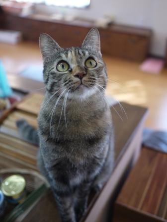 猫のお友だち ワサビちゃん天ちゃんう京くん編。_a0143140_2343957.jpg
