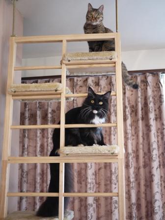 猫のお友だち ワサビちゃん天ちゃんう京くん編。_a0143140_23521559.jpg