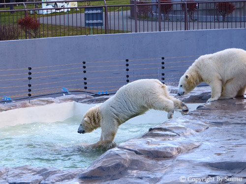 泳ぎたいララ母さん。_d0154140_23160588.jpg