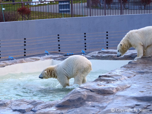 泳ぎたいララ母さん。_d0154140_23162519.jpg
