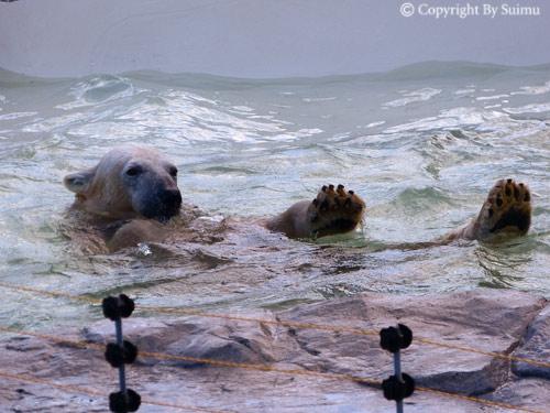 泳ぎたいララ母さん。_d0154140_23172124.jpg