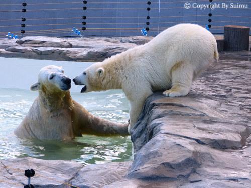 泳ぎたいララ母さん。_d0154140_23182361.jpg