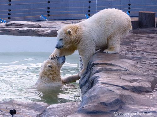 泳ぎたいララ母さん。_d0154140_23193417.jpg