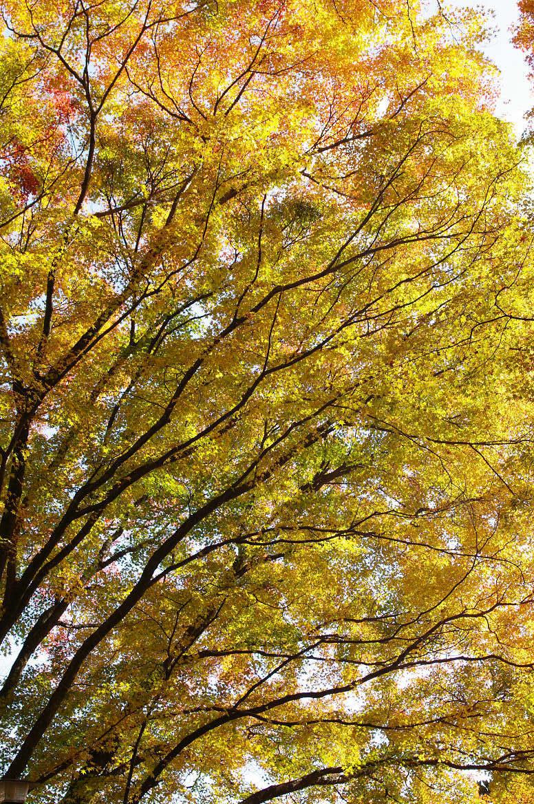 京都の紅葉 2013 〜金蔵寺〜_f0152550_002082.jpg