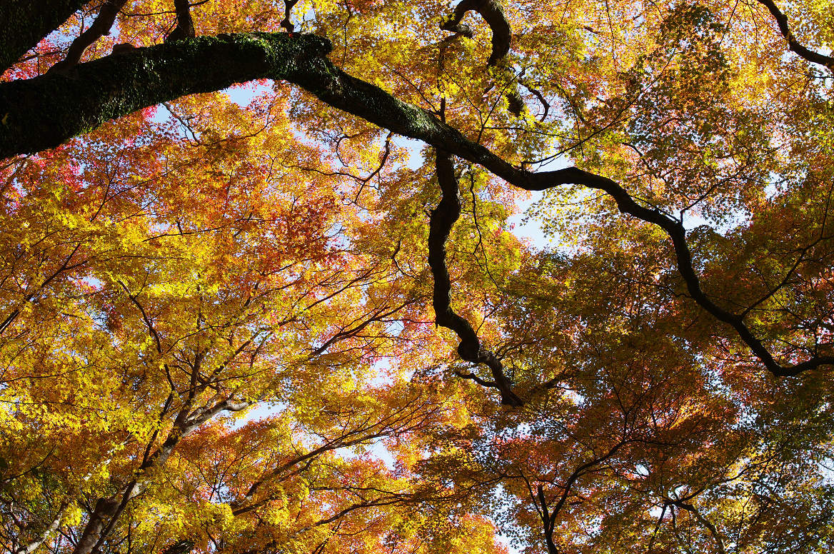 京都の紅葉 2013 〜金蔵寺〜_f0152550_0033100.jpg