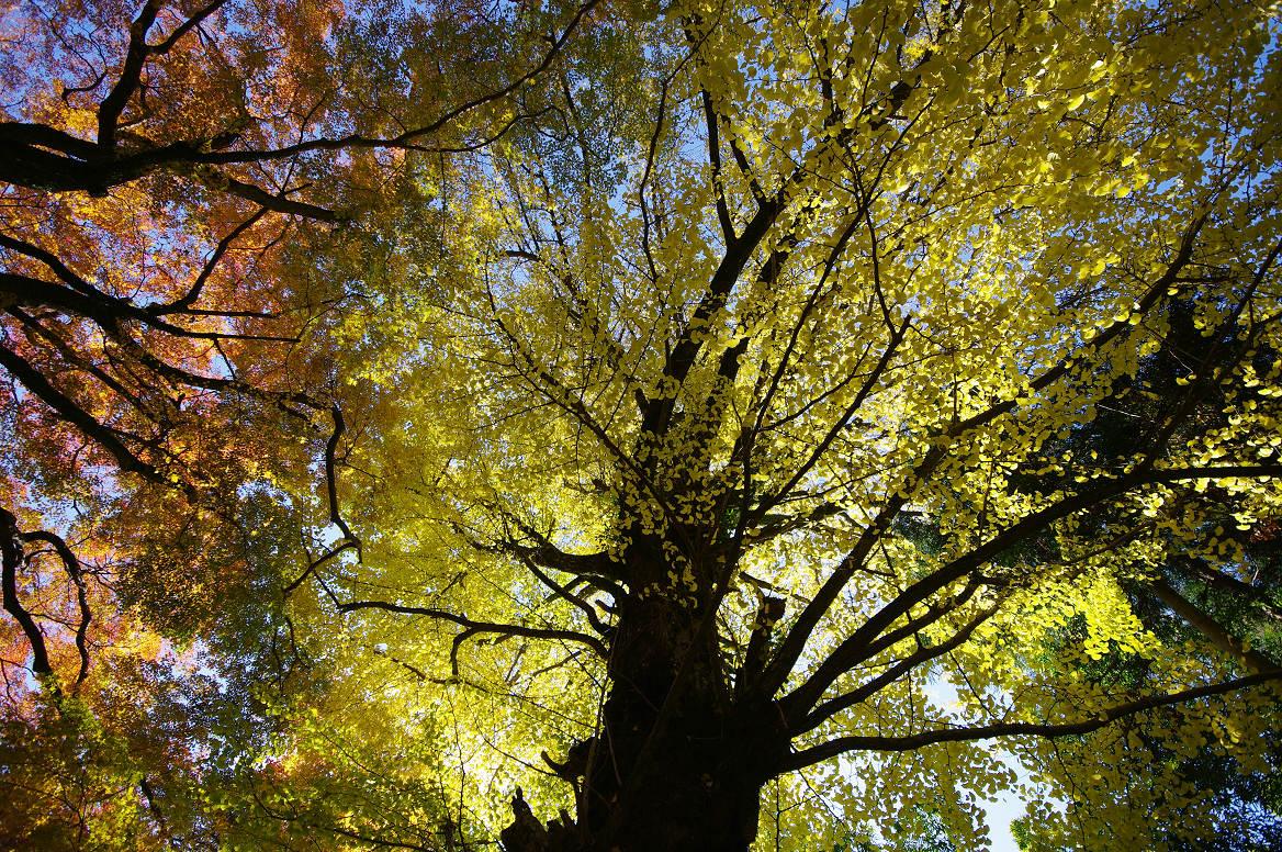 京都の紅葉 2013 〜金蔵寺〜_f0152550_004720.jpg