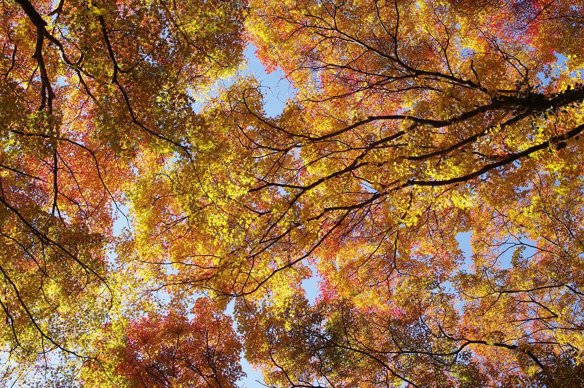 京都の紅葉 2013 〜金蔵寺〜_f0152550_00723.jpg